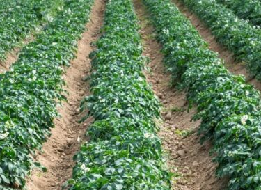 Adobestock akkerland landbouw