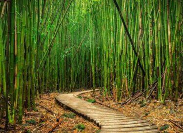 Adobestock bamboe