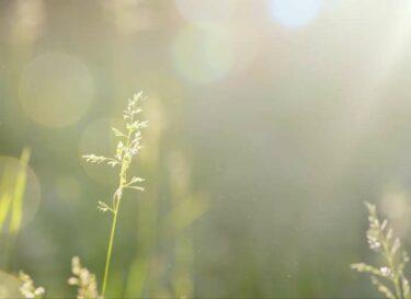 Adobestock bloemetjes zon zonnestraal