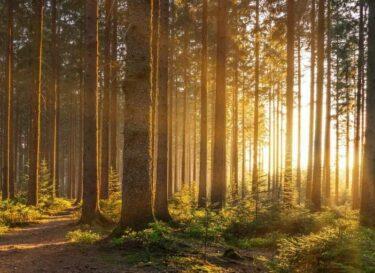 Adobestock bomen bos