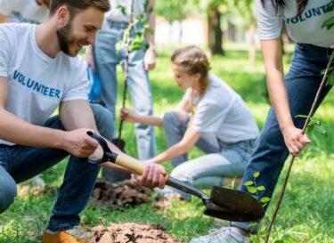 Adobestock duurzame doelen verenigde naties sdg bosbouw bomen planten