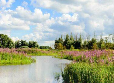 Adobestock natuur biodiversiteit