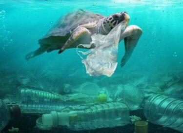 Adobestock plastic oceaan schildpad