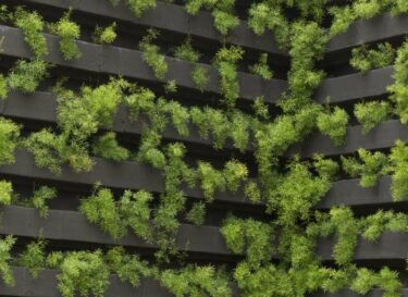 Adobestock vertical farming plantjes