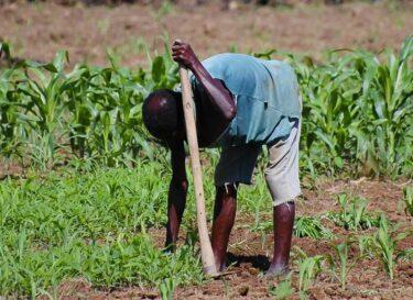 Afrikaanse boer afrika