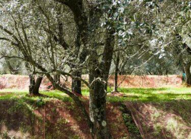 Agroforestry mengteelt landbouw