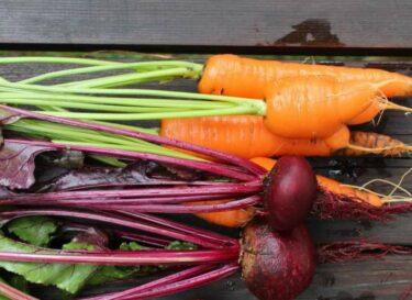 Bieten en wortels