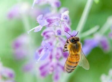 Bijen honey highway