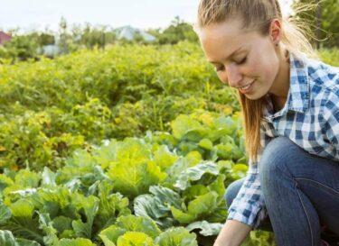 Boer boerin vrouw kool landbouw europa adobe stock change inc
