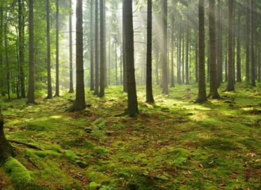 Bos bosbeheer duurzaamheid