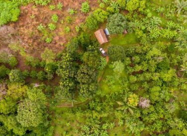 Credits adobe stock agroforestry in amazonegebied