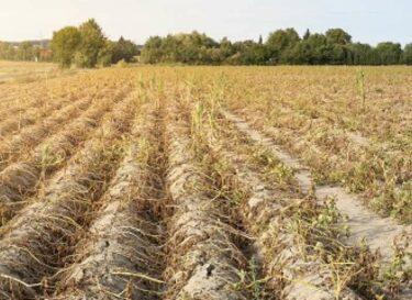 Droogte klimaatverandering landbouw