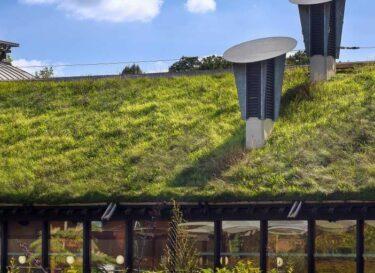 Groen dak natuur bouw adobe stock