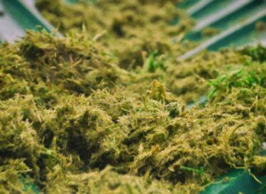 Groen strooizout noord holland