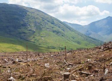 Grondstoffen bomen ontbossing