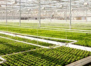 Kas planten groen zon glas adobe stock