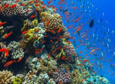 Klimaatimpact koraal