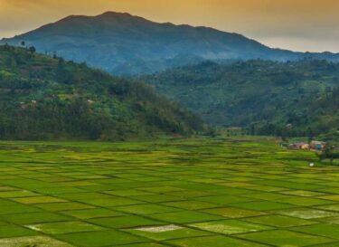 Landbouw rwanda