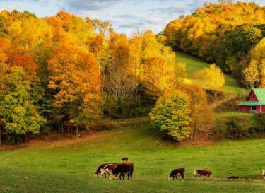 Landschap boerderij bomen herfst adobe stock