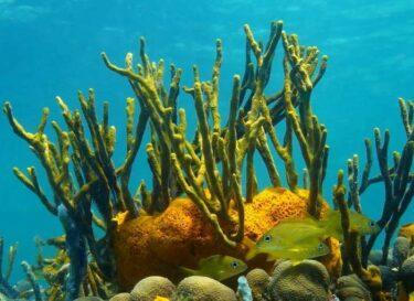 Mexicaans koraalrif