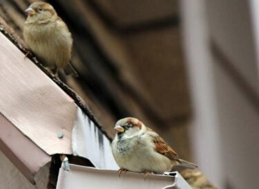 Mussen beschermde dieren