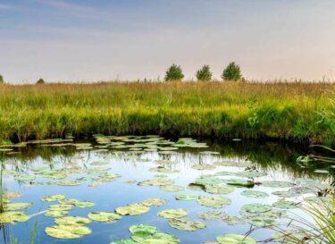 Natuurgebied klein