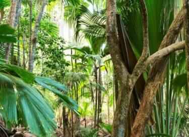 Regenwoud adobe stock palmolie