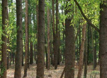 Smurfit kappa forestry