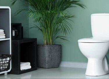 Toilet groene muur plant mooi change inc adobe stock