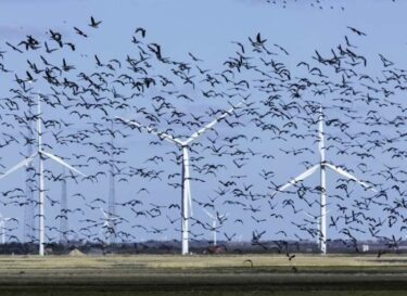 Vogels windturbine adobe stock