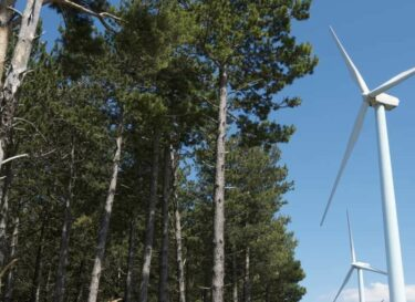 Windmolens in bos